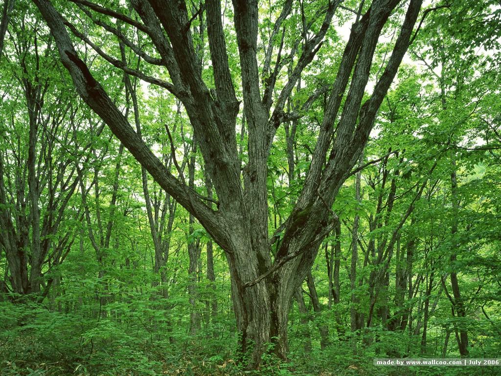 何本にも分かれる樹木画像